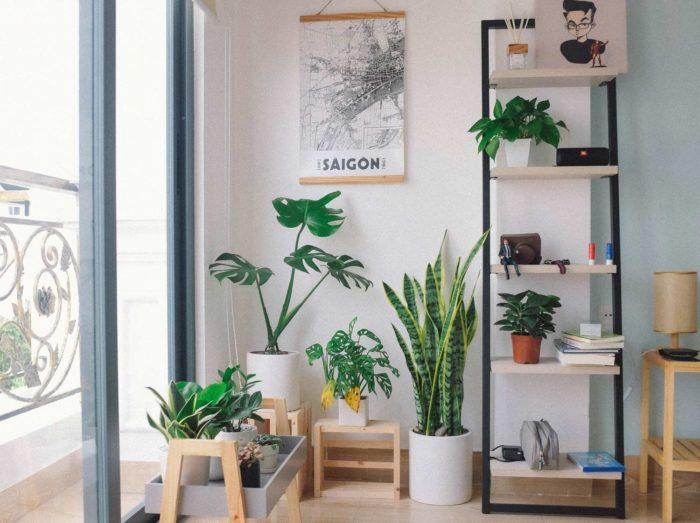 Decoración salón con plantas de interior